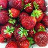 Tips i jordgubbstider