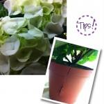 blomkruketips